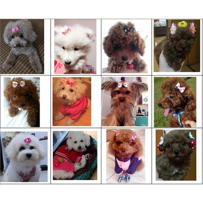 100Pcs/lot Cute Handmade Dog Hair Bows With Rubber Bands Small Bowknot Cat Puppy Grooming Accessories For Dogs Charms Gifts