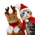 Pet Dog Cat Scarf Cap Cloak Headband Set Gifts Christmas Party Winter Clothes