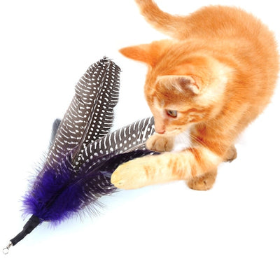 Cat Toy Refill Wand Interactive-Toys Gift Bird-Feather Home New 5PCS Gatos