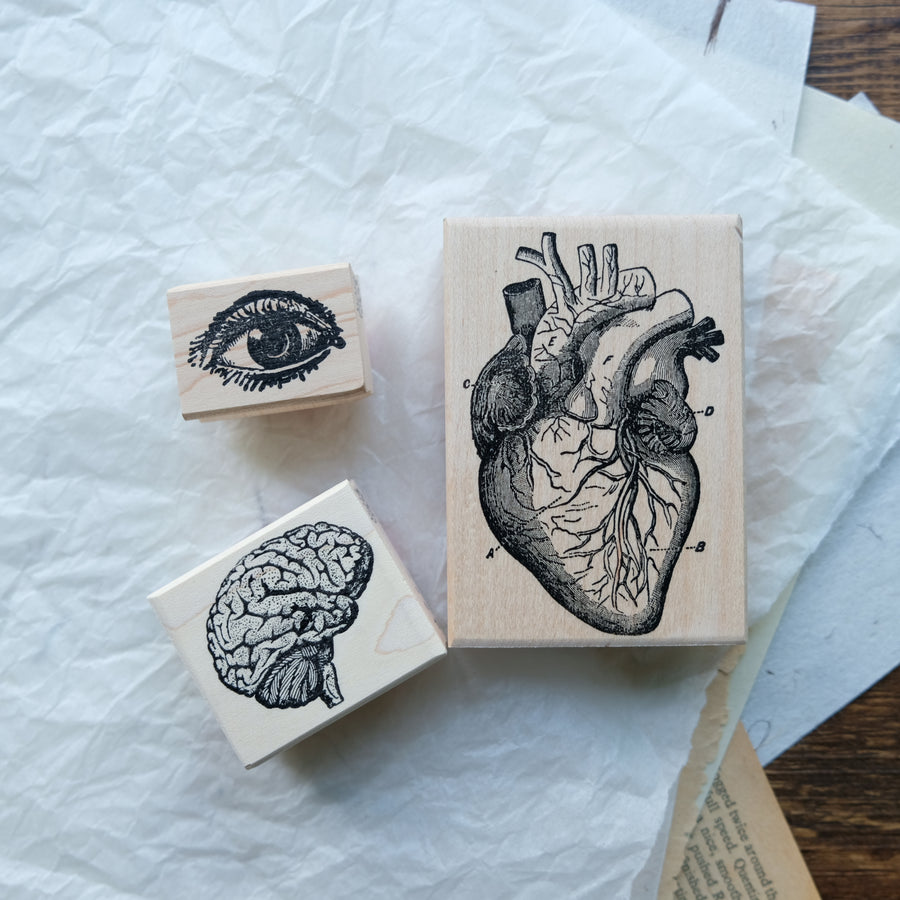 100 Proof Press Rubber Stamp Set - Anatomy