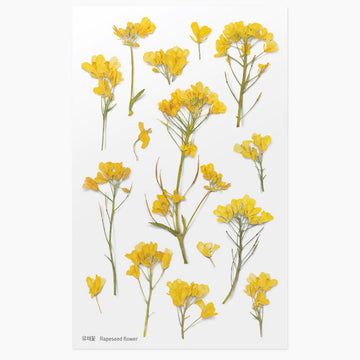 Appree Press rapeseed flower sticker