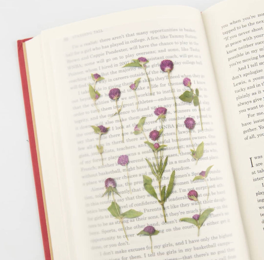 Appree Press Globe amaranth sticker