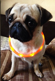 USB Rechargeable LED Silicone Collar For Dogs - Safety Warning Collar