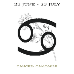 Insert cards for Illumine Cancer Camomile Candle