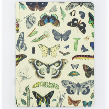 Butterfly Hardcover