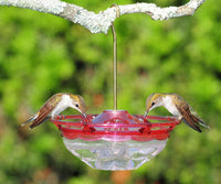 Aspects Hummingbird Feeder Blossom Rose