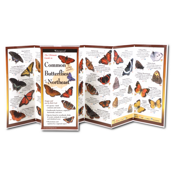 Common Butterflies of Northeast Folding Guide