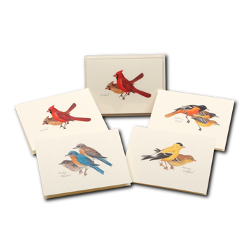 Peterson Bird Boxed Card