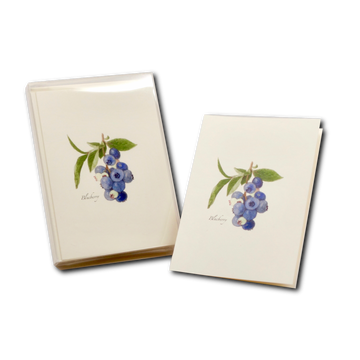 Blueberries Boxed Cards