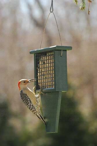Suet Feeder With Tail Prop