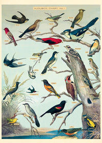 Audubon Bird Gift Wrap