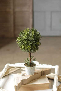 NE Boxwood Topiary