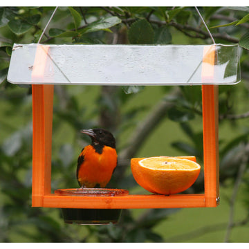 Oriole Feeder Green Solutions