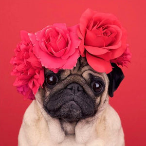 Pug Roses Diamond Painting Kit - DIY