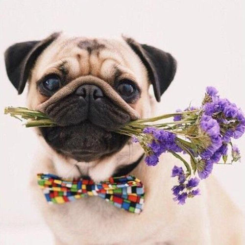 Pug Flowers Diamond Painting Kit - DIY