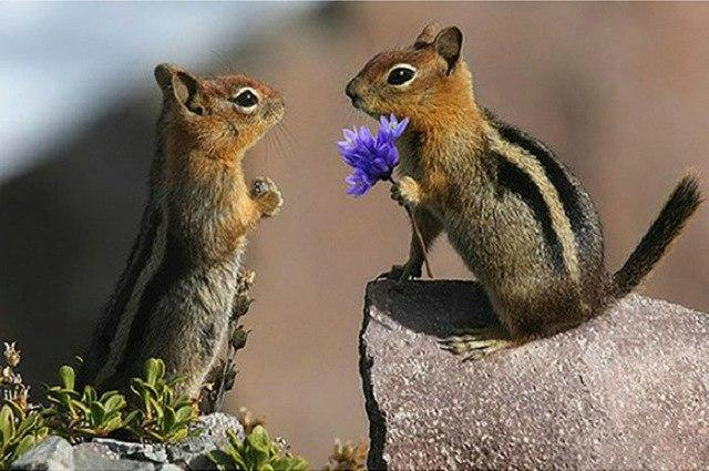 Chipmunk Love Diamond Painting Kit - DIY