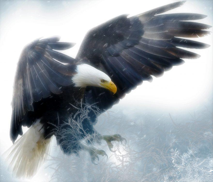 Bald Eagle Diamond Painting Kit - DIY