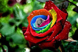 Rainbow Flowers Diamond Painting Kit - DIY Rainbow Flowers-16