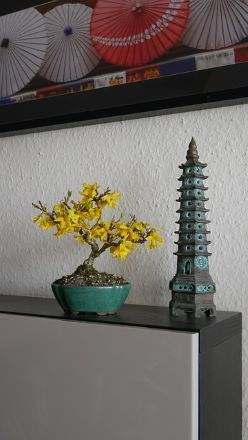 Where do I put this? - 9 Things to consider when deciding on a locations to showcase your Bonsai.