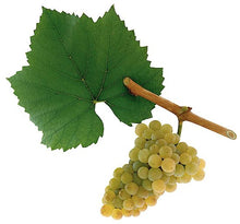 Load image into Gallery viewer, Chardonnay Grape Bonsai