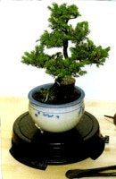 Black Indoor/Outdoor Bonsai Turntable Display