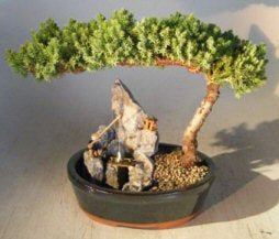 Stone Landscape Juniper Bonsai - Bonsai Creek