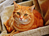 cute orange cat sitting