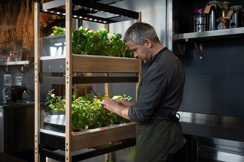 Chef harvesting herbs from the Click & Grow 25 in a restaurant kitchen.