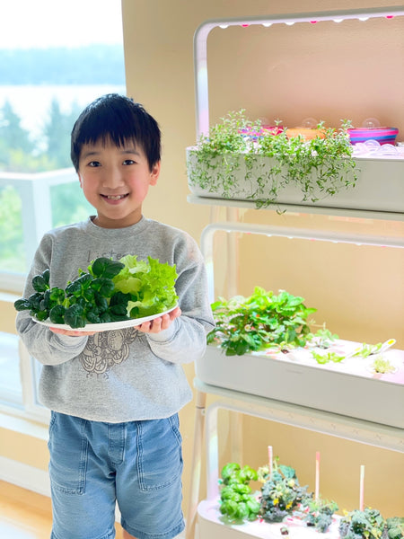 easy plants to grow indoors