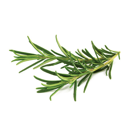 Click & Grow Rosemary against a white backdrop.