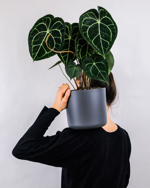 Girl holding a potted houseplant on her shoulder.
