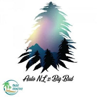 Auto Northern Lights X BigBud- TShirt