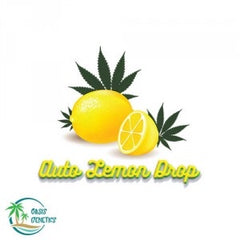 Auto Lemon Drop- TShirt