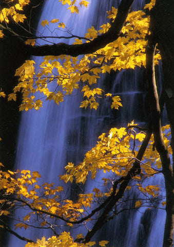 Brandywine Falls in the Autumn
