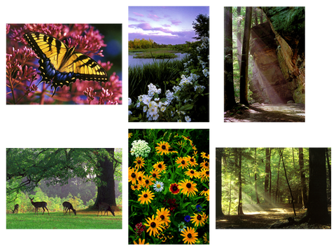 Summer in the Cuyahoga Valley - Box of 6 Notecards