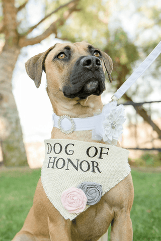 Cute puppy dog wearing Dog of Honor scarf at wedding