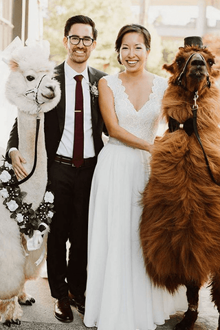 A llama and an alpaca dressed up posing with newlywed couple at wedding