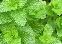 Load image into Gallery viewer, Organic Spearmint Tea