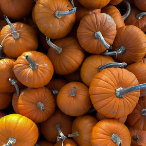 pumpkins by Justin Lynch at Healing Herbal Skincare