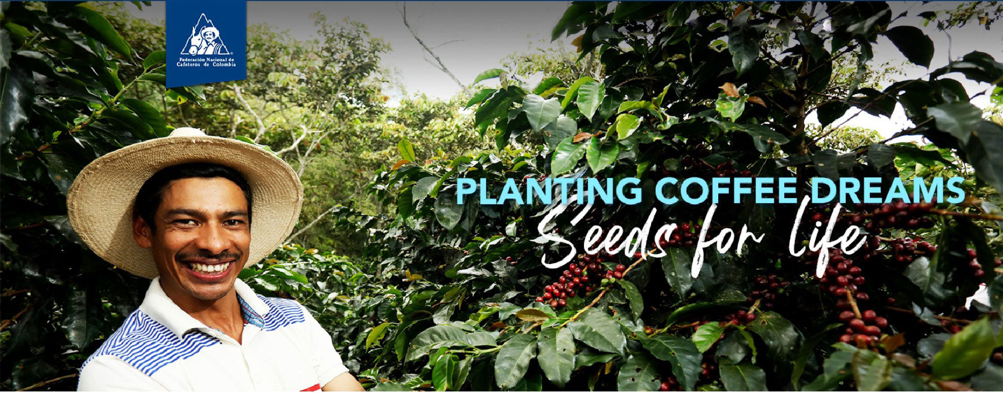 roestkaffee planting coffee dreams