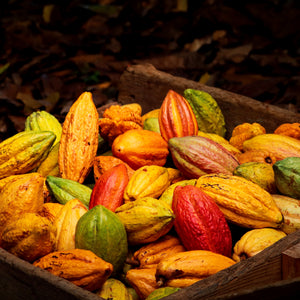 local hawaiian cacao pods
