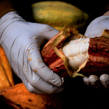 Load image into Gallery viewer, hawaiian chocolate tour shows farm cacao pod