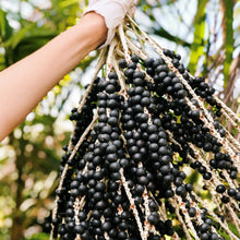 Load image into Gallery viewer, what acai berries look like on the farm in hawaii