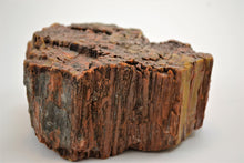 Load image into Gallery viewer, Petrified Wood