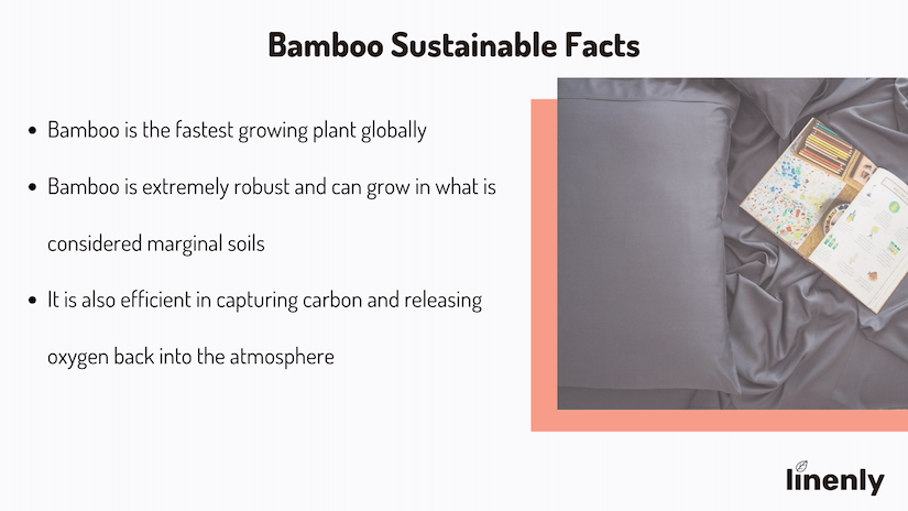 Is Bamboo Fabric Sustainable Infographic