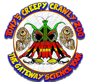 The Creepy Crawly Zoo