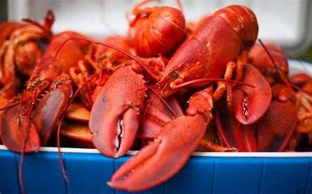 Everything you ever wanted to know about Lobster!