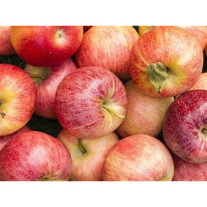 Gala Apples - 4 Pack - The Chef Scott Shop