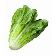 Head of Romaine lettuce - each - The Chef Scott Shop