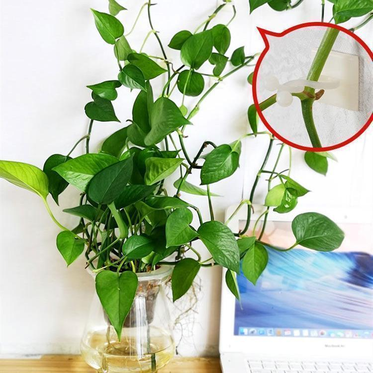 Plant Climbing Wall Fixer Self-Adhesive Hook - bginvention